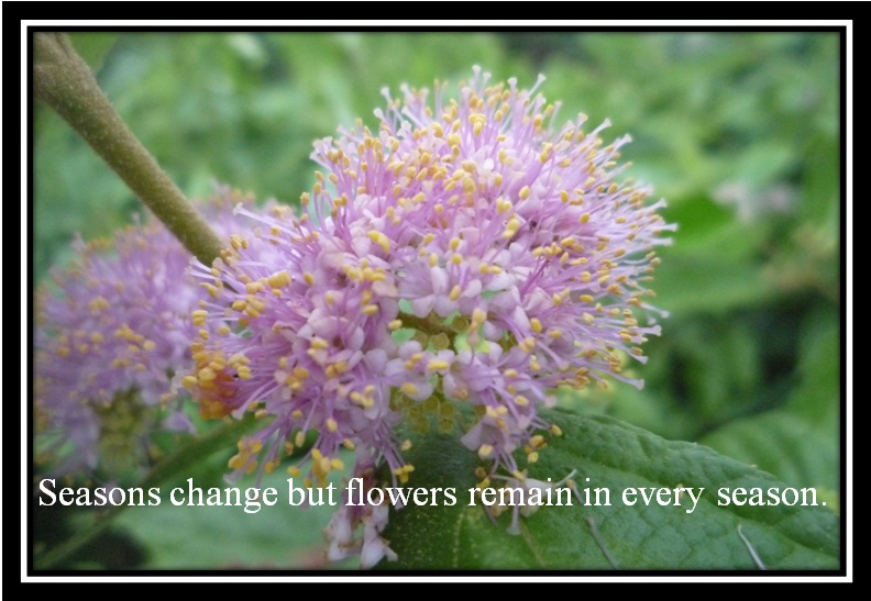 Photos With Quotes Flowers Beauty