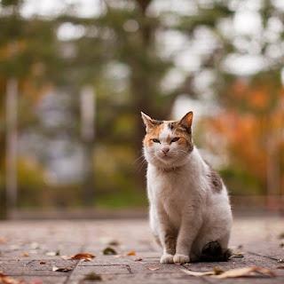 cakar-kucing-kluangtoday