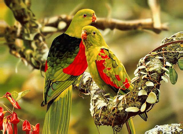 Beautiful Birds Wallpapers