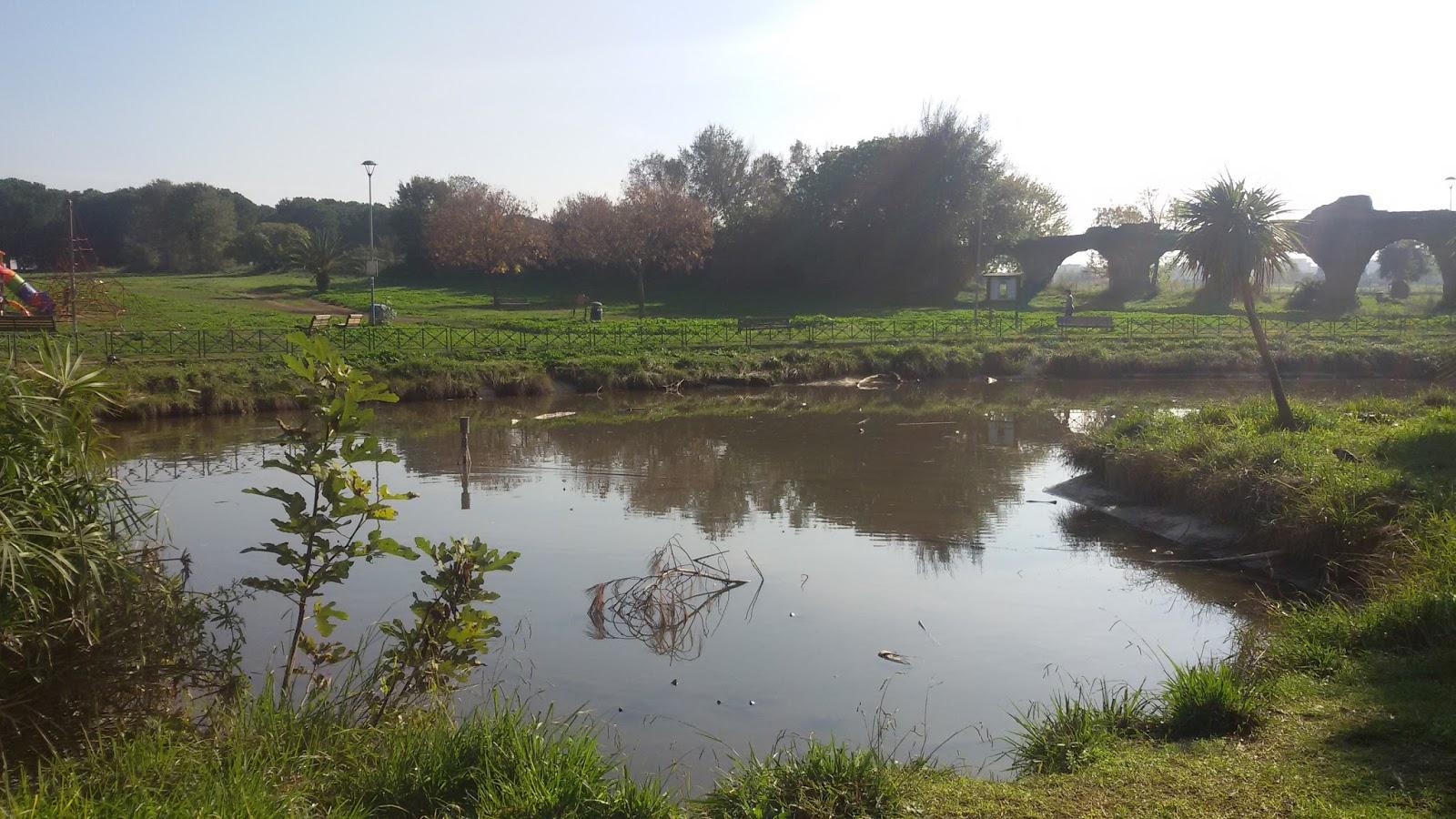 Wwf pigneto prenestino situazione del laghetto del parco for Lago per tartarughe