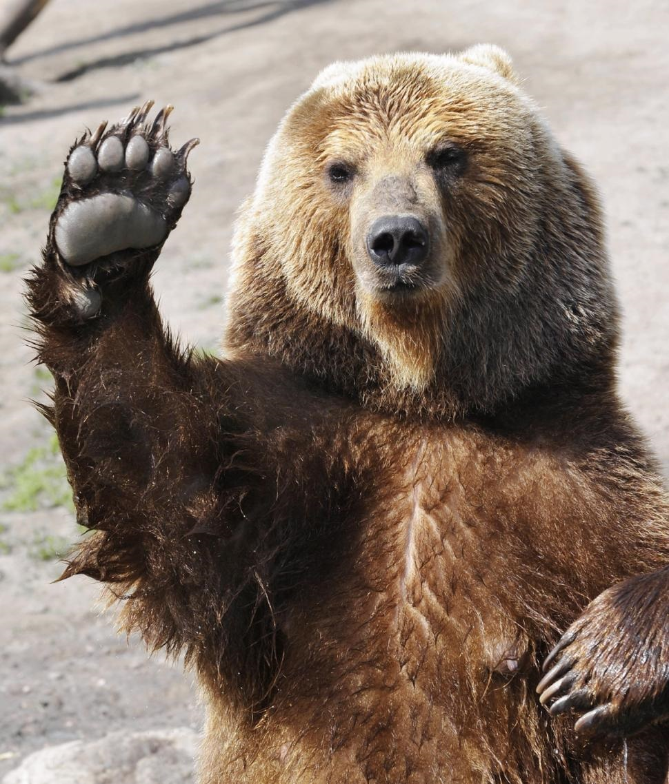 The Center bear says stop and that he loves you