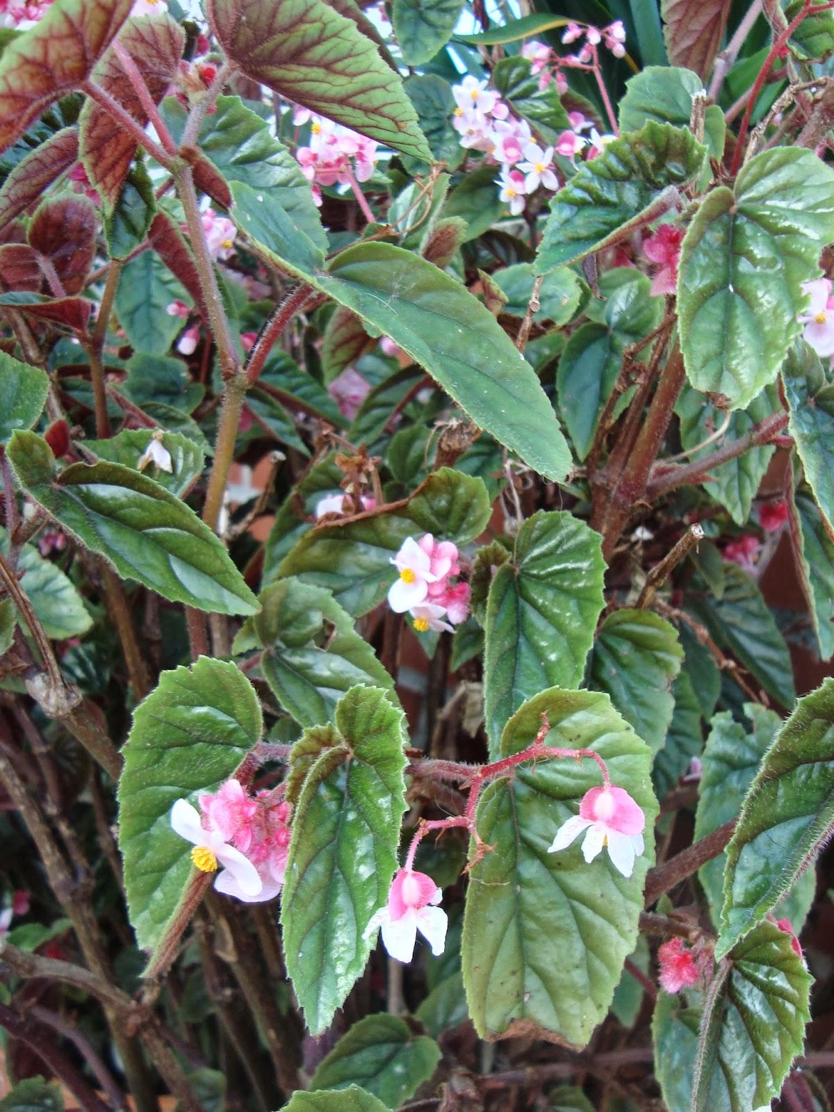 Floresamatxo todo sobre las flores consejos para cuidar - Como cuidar las plantas de exterior ...