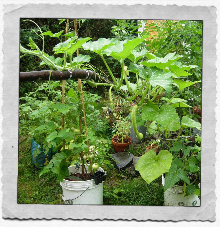 Wild Backyard Party : My Kitchen Garden Party My Wild and Crazy Garden