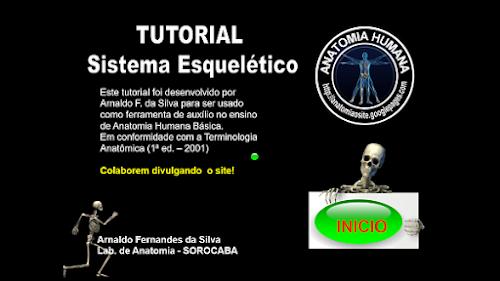 Tutorial - Sistema Esquelético!