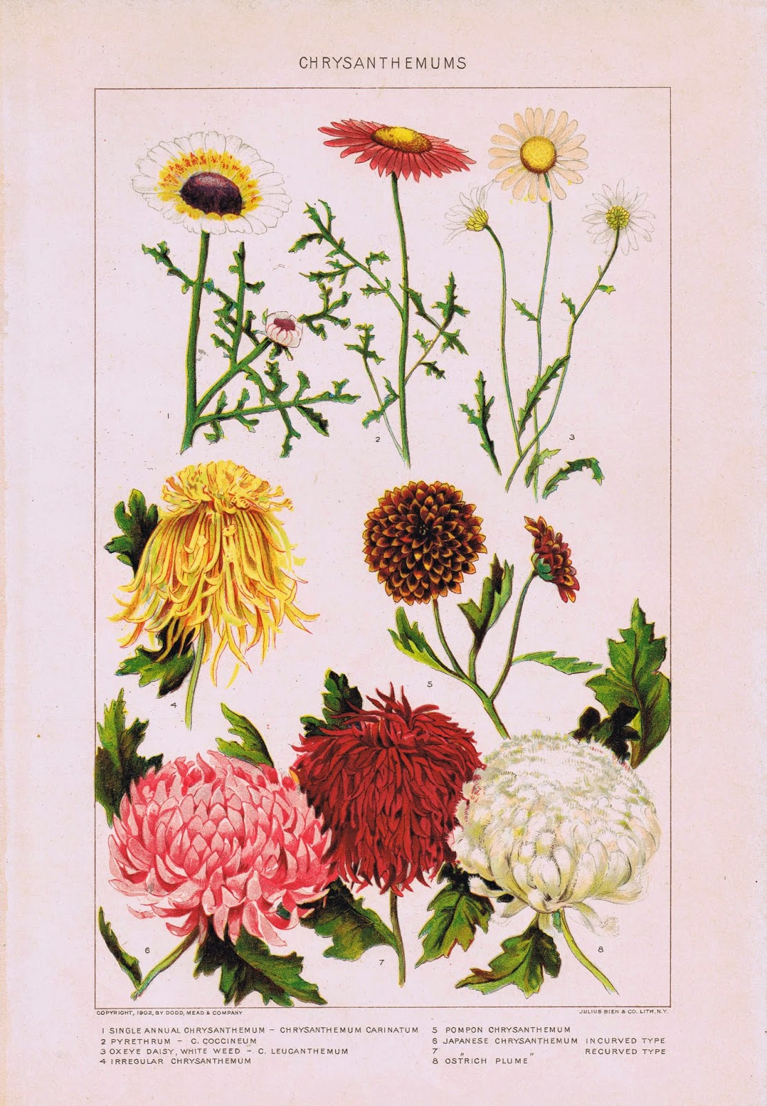 Mums Garden Flowers Printable via knickoftimeinteriors.blogspot.com