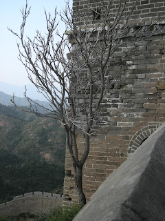 tree growing inside the Great Wall