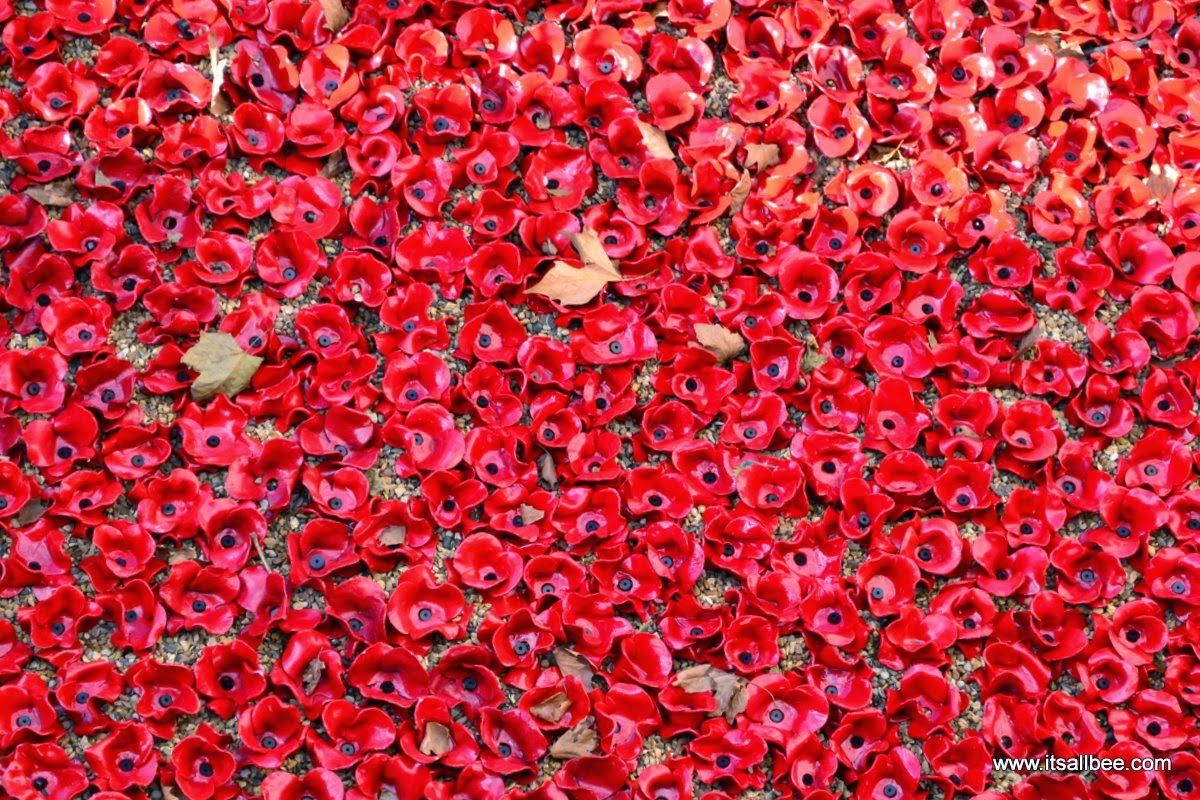 tower of london poppies | tower of london pictures