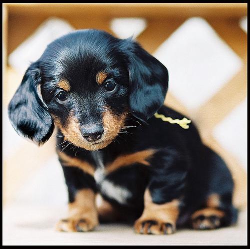 coño aficionado perrito