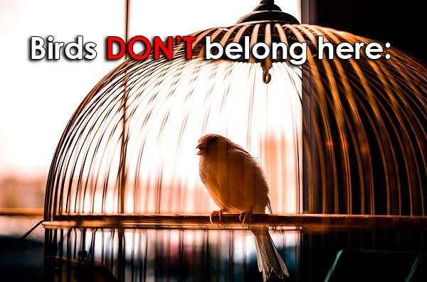 Las aves no pertenecen a celdas