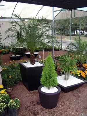 Arte y jardiner a el jard n en macetas for Arbustos para macetas exterior