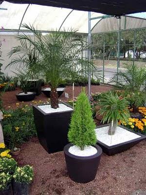 Arte y jardiner a el jard n en macetas for Plantas para macetas grandes de exterior
