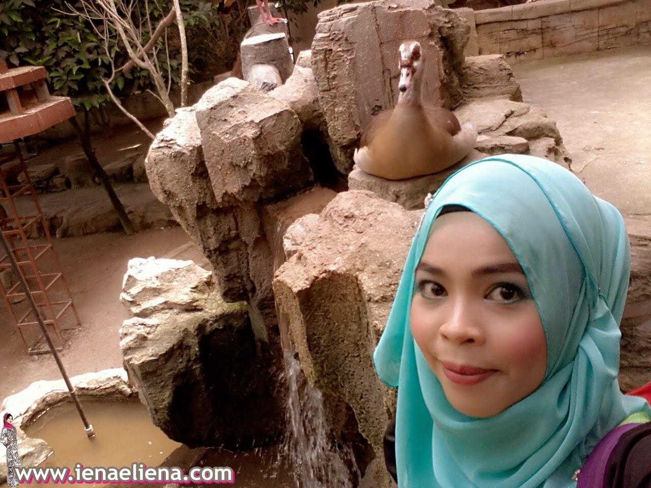 Selfie Farm In The City Sri Kembangan