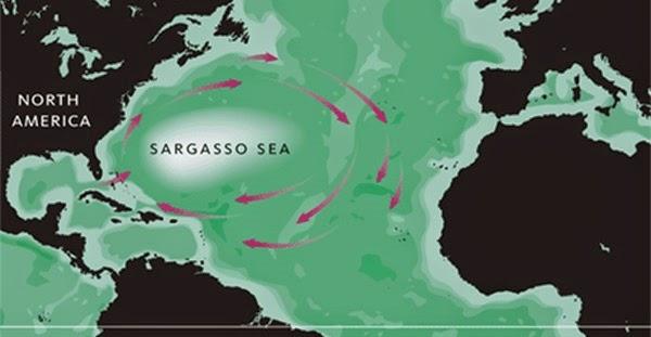 O Mar do Sargaço