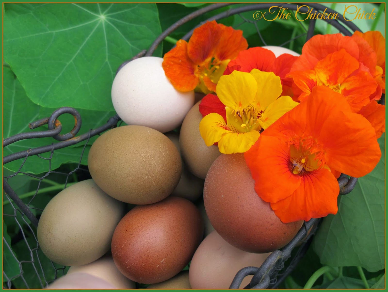 Eggs and nasturtium