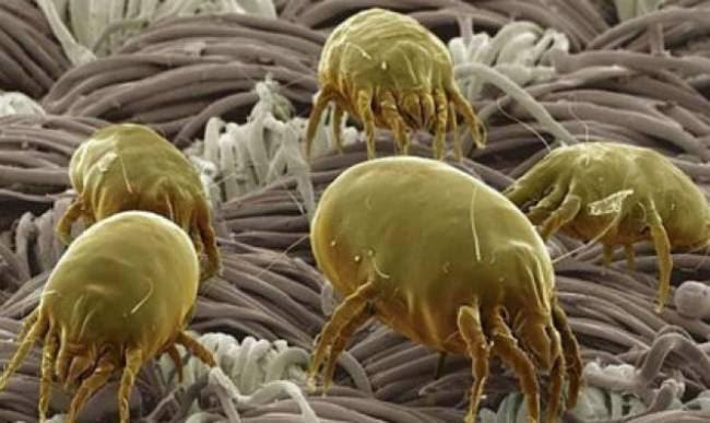 Τα βακτήρια του που βρίσκονται πάνω στην οδοντόβουρτσα.