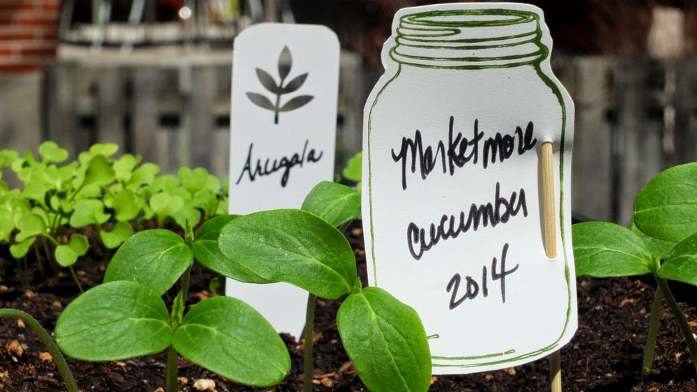 Plant markers, herb garden, vegetable garden, eco garden solutions, garden plant markers, identification of seedlings, garden organization