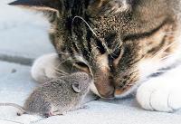 hoşgörü, kedi fare hoşgörmek