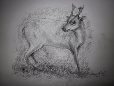 Lagomeryx