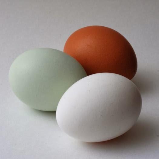 Encontraste un huevo de gallina azul? Felicidades, tu gallina tiene un virus