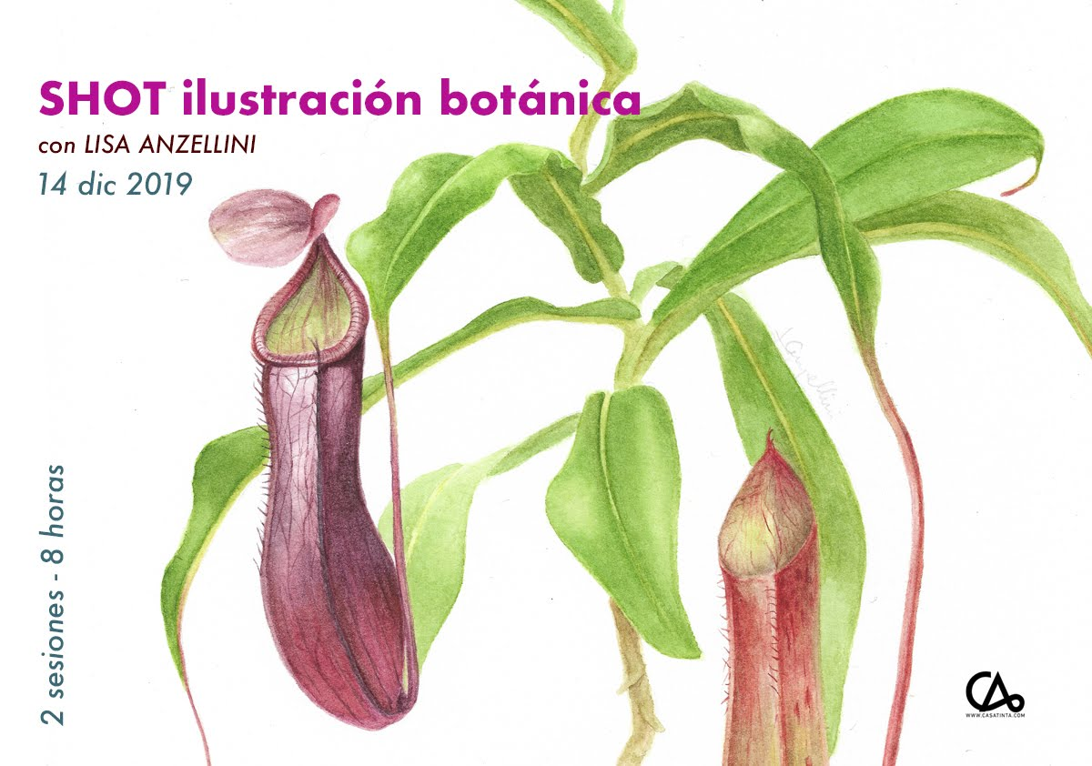 SHOT ilustración botánica // 14 dic