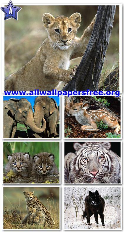 wallpaper 1600 x 1200. Animals Wallpapers 1600 X 1200