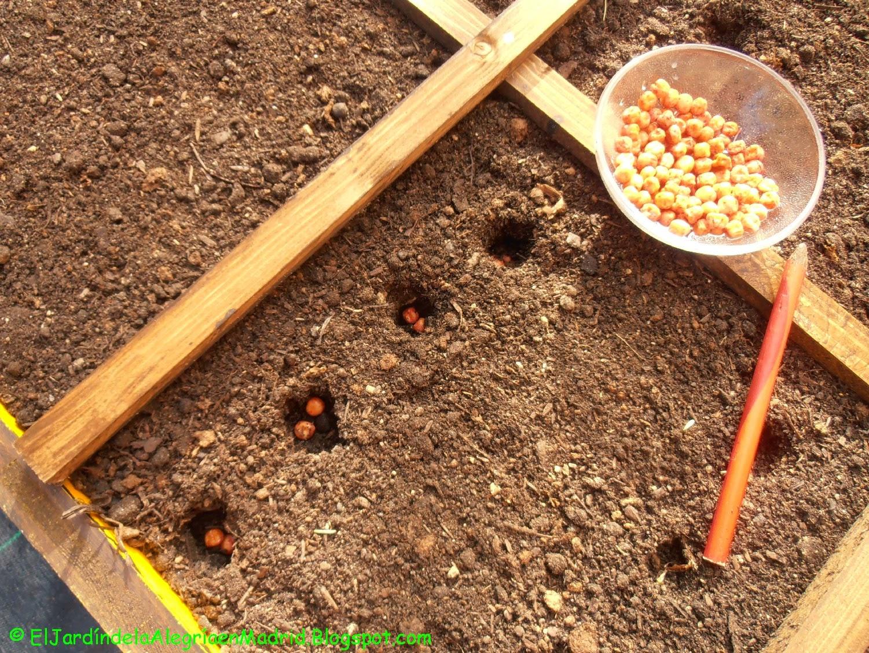 El jard n de la alegr a mis primeras semillas en el for Siembra de habas y guisantes