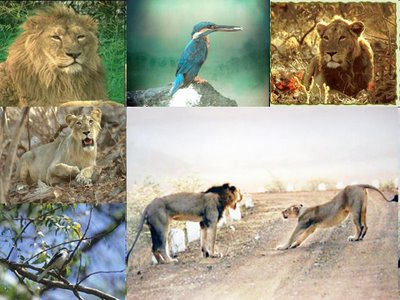 Wildlife Sanctuary in Gujarat, India