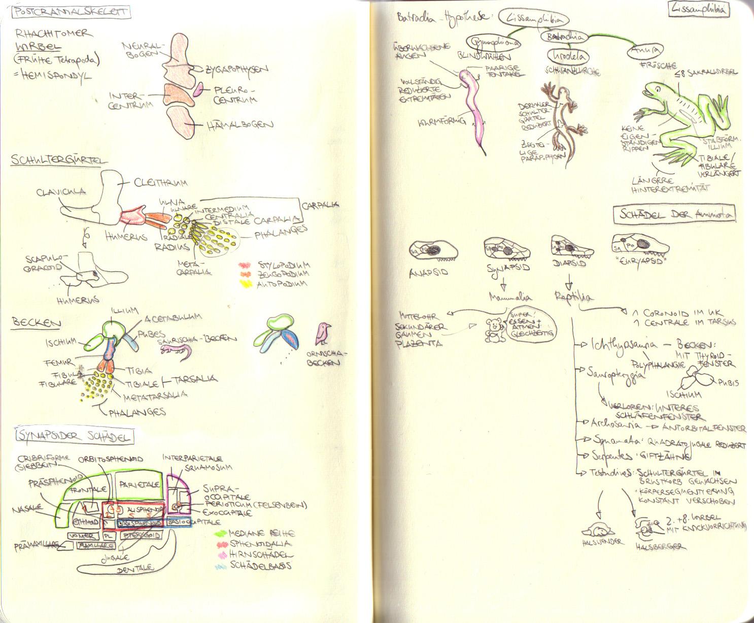 Wunderbar Lernen Anatomie Zeitgenössisch - Menschliche Anatomie ...