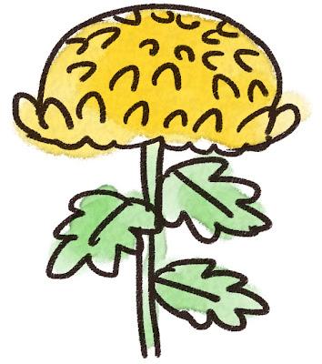 菊のイラスト(花)