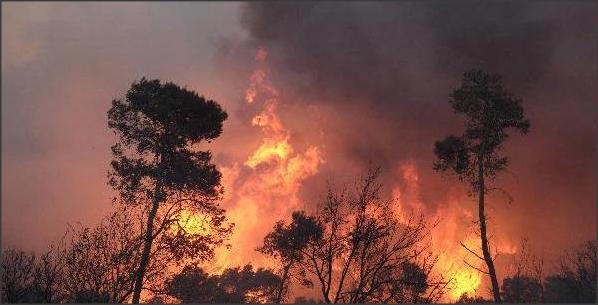 Mengapa Ada Kebakaran Hutan atau Kabut Asap di Sumatra?