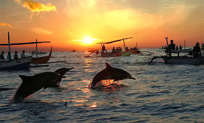 Lovina Beach, dolphin in Lovina Beach, sunrise in lovina, Sanur Beach