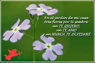 Frases De Amor: En El Jardín De Mi Casa Tres Flores Por Ti Sembré Un Te Quiero Un Te Amo Y Un Nunca Te Olvidaré