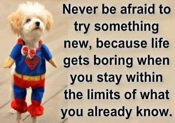 funny  about learning quotes: something afraid life new  new Never quotes be try to inspiration something