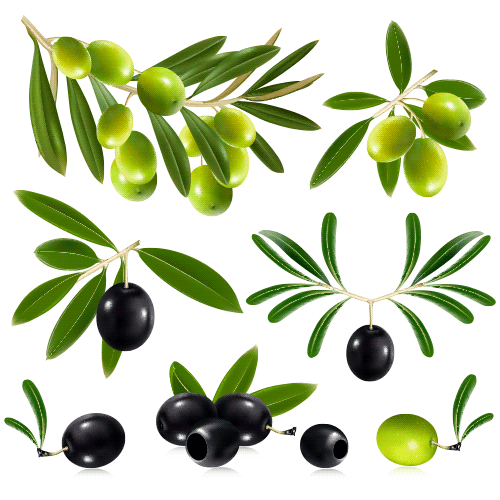 Ramas de olivo y aceitunas