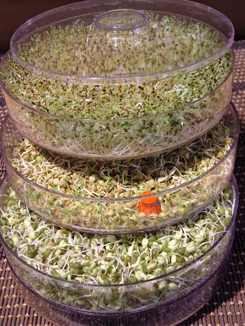 Żródło:http://smak-zdrowia.blogspot.com/2011/11/przepis-na-kieki.html
