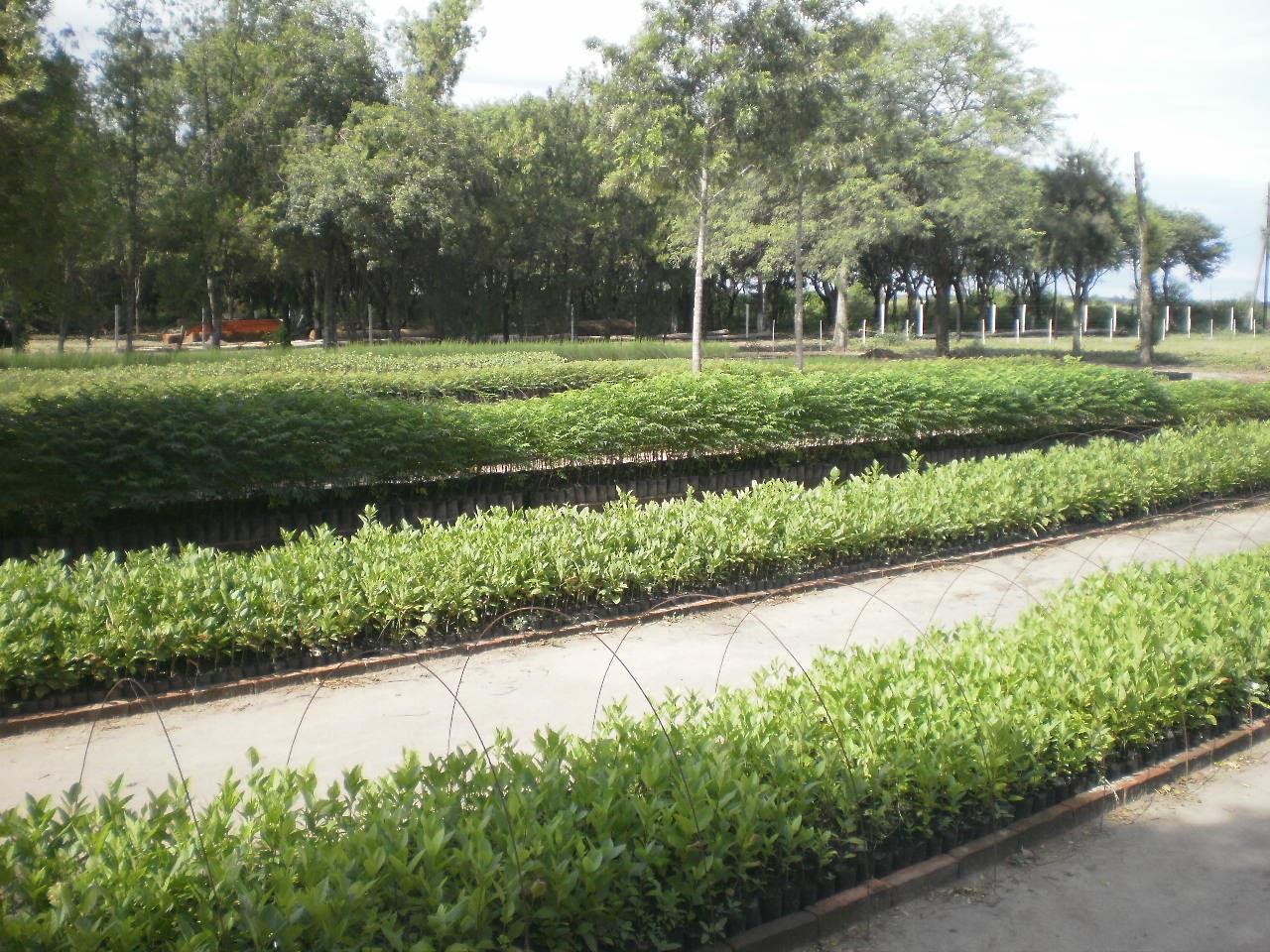 Vivero forestal san bernardo hoy for Proyecto productivo de vivero forestal
