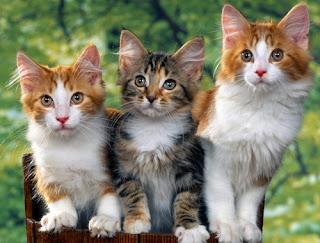 Gambar Kucing Manis | Berita Informasi Terbaru dan Terkini