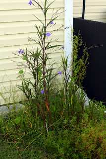 weeds in fall garden