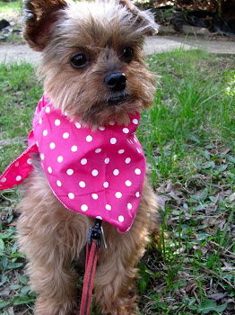 Fun scarfs from Lilly Foschino dog fashion