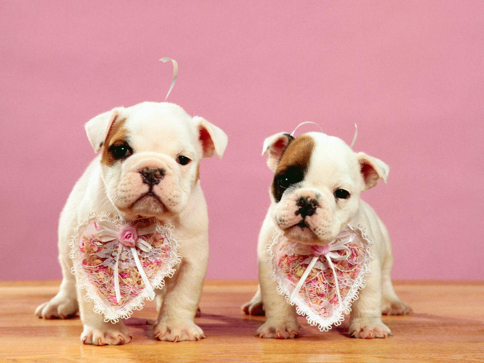 http://1.bp.blogspot.com/-BYZb9BPb4Oc/TVle8SiCfrI/AAAAAAAAAEo/ZUK2UH__rwc/s1600/Be+Our+Valentines_.jpg