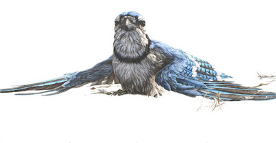 Photo-Realistic Ink Paintings of Animals by George Boorujy Seen On www.coolpicturegallery.us