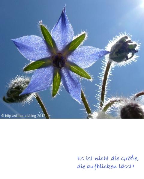 © Sistlau 2011 Borretsch