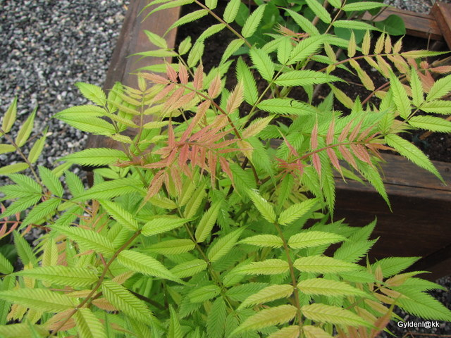 planteskole oslo akershus