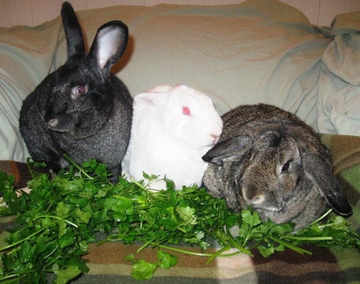 Rabbit Slippers Flower Power For Bunnies