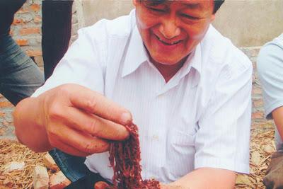 Trùn quế Tiền Giang