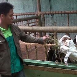 Kunjungan ke Peternakan Kambing Etawa tgl 23 April 2013