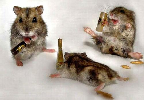 Basmi Tikus
