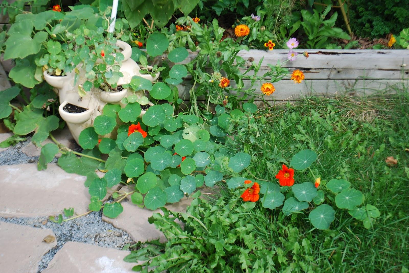 3 jardins au qu bec la bonne mine de la capucine for Autre jardin quebec
