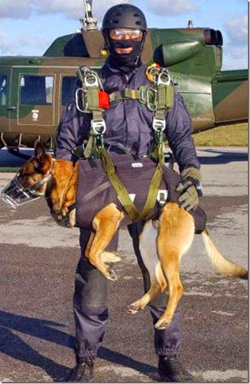 STRANGE FACTS: Navy Seal Dogs