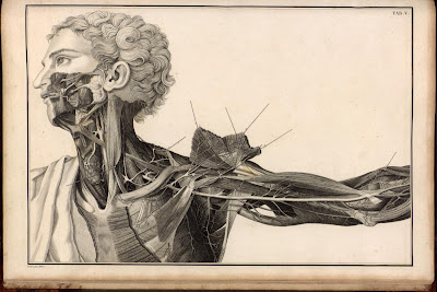 A medical drawing by Faustino Anderloni